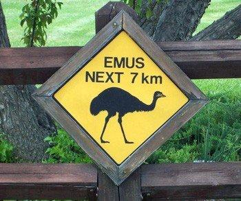 Wild Rose Emu Ranch - Home of 100% Pure Emu Oil